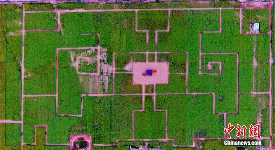 甘肃张掖打造花海迷宫