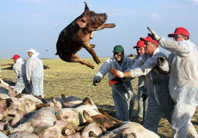 粤排查2500多万头生猪 尚未发现非洲猪瘟疫情