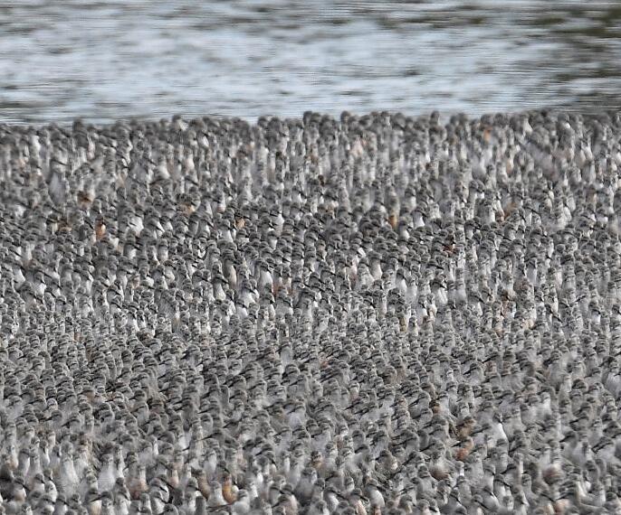 水鸟飞向沙洲场面壮观