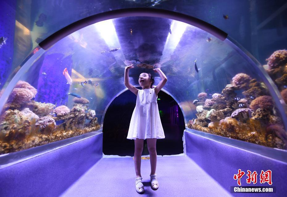 杭州商场里开动物园 市民近距离接触自然