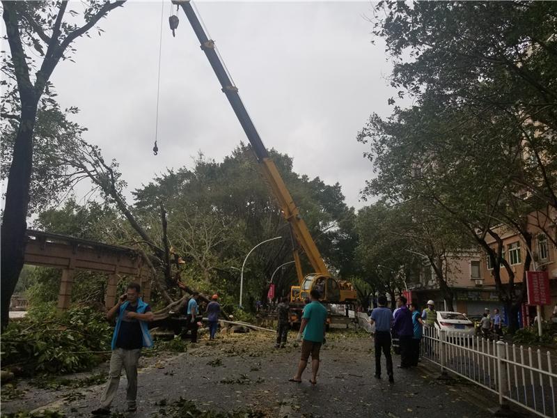 江门城区绿化树倒伏严重 城管环卫等部门迅速应急处置