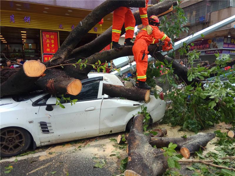 台风过后 多部门人员上街忙清障
