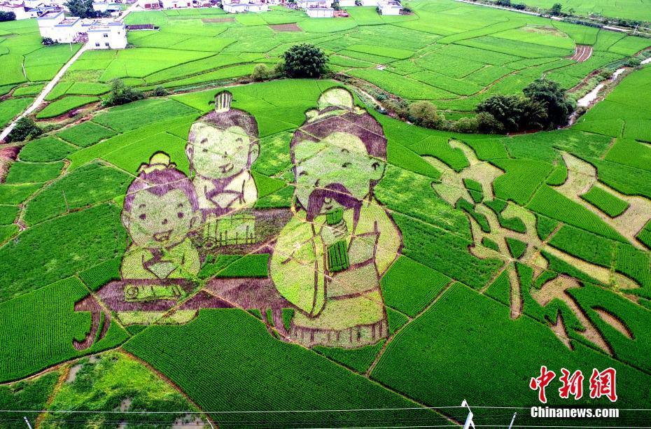 广西现稻田艺术景观带