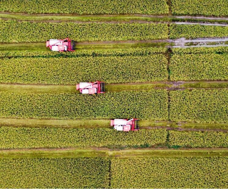 苏北稻田绘就丰收图景