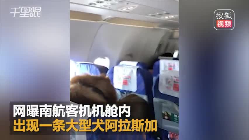 网曝南航飞机上惊现阿拉斯加