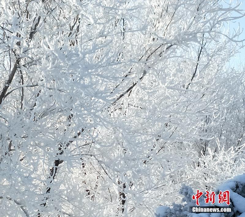 新疆现壮美雾凇景观