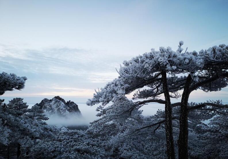 黄山迎来今冬第三场雪 云海雾凇壮美景观齐现