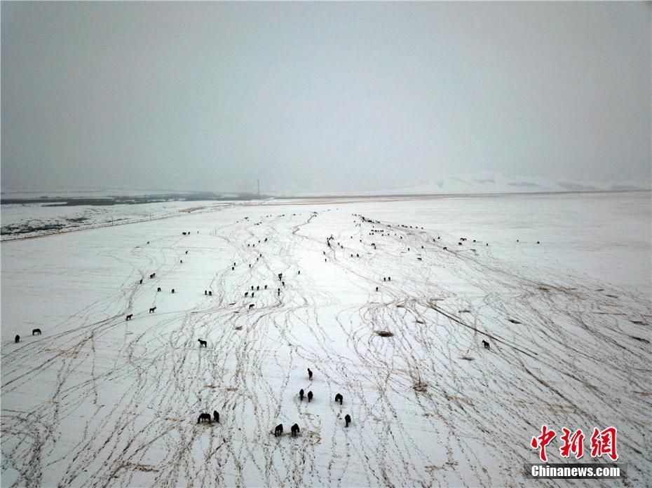 马场勾勒冬日草原美景