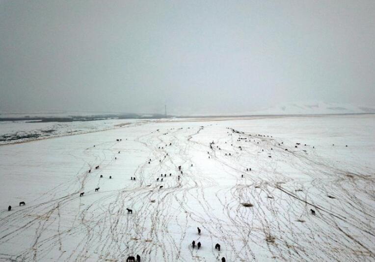 雪落山丹马场 勾勒冬日草原美景图