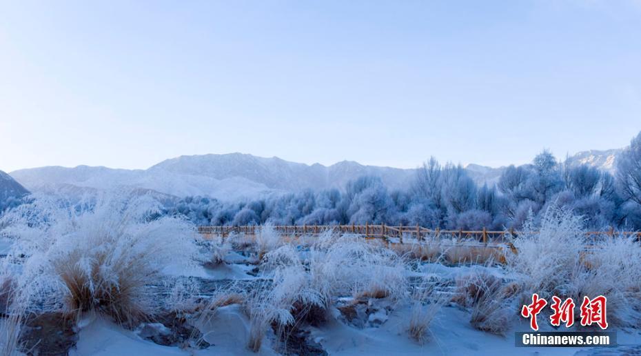 甘肃雪后雾凇晶莹剔透