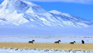 阿里地区旅游收入突破10亿元