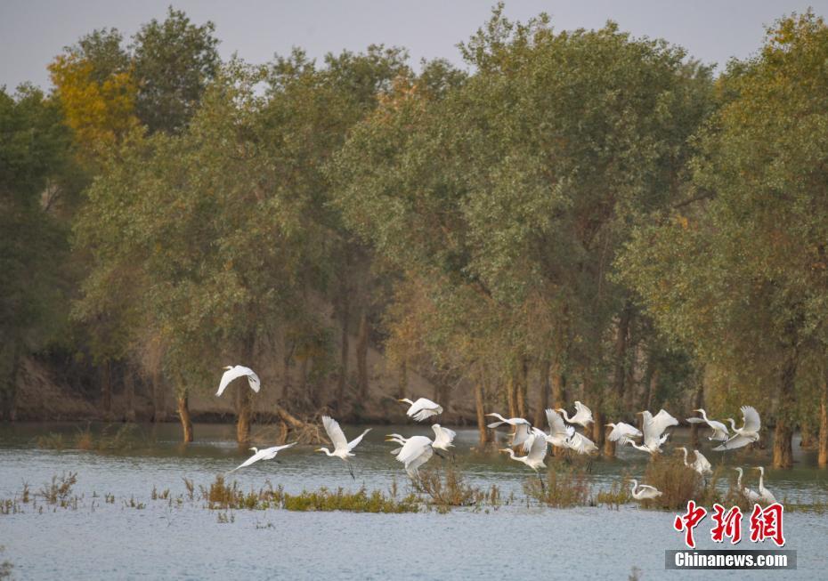 河畔美景如畫白鷺翩舞