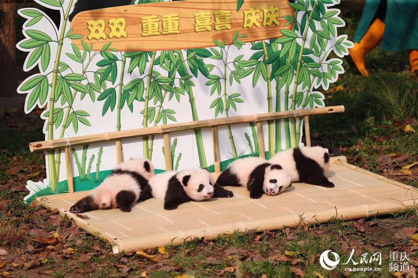 雙胞胎大熊貓有名字了