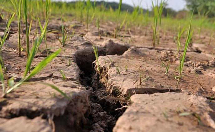 湖南96县市出现气象干旱,已开展今年首次飞机人工增雨作业