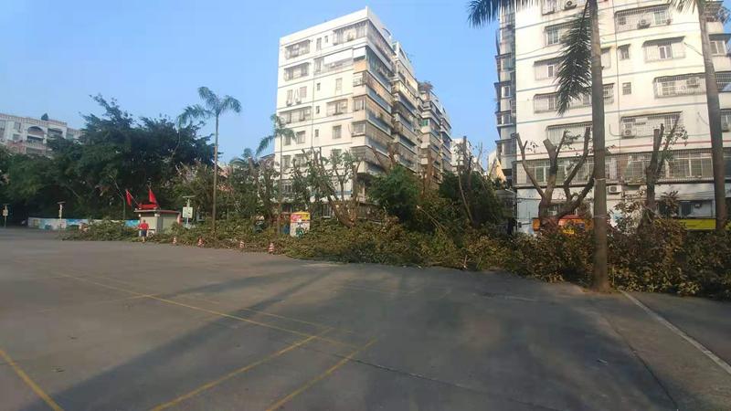 蓬江區:樹木高冠幅過大 城管部門統一修剪
