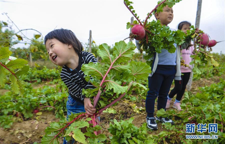 永清:農業+文化+旅游