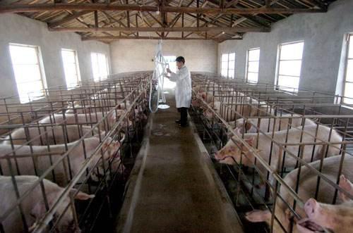 广东省发放首笔生猪活体抵押贷款500万元
