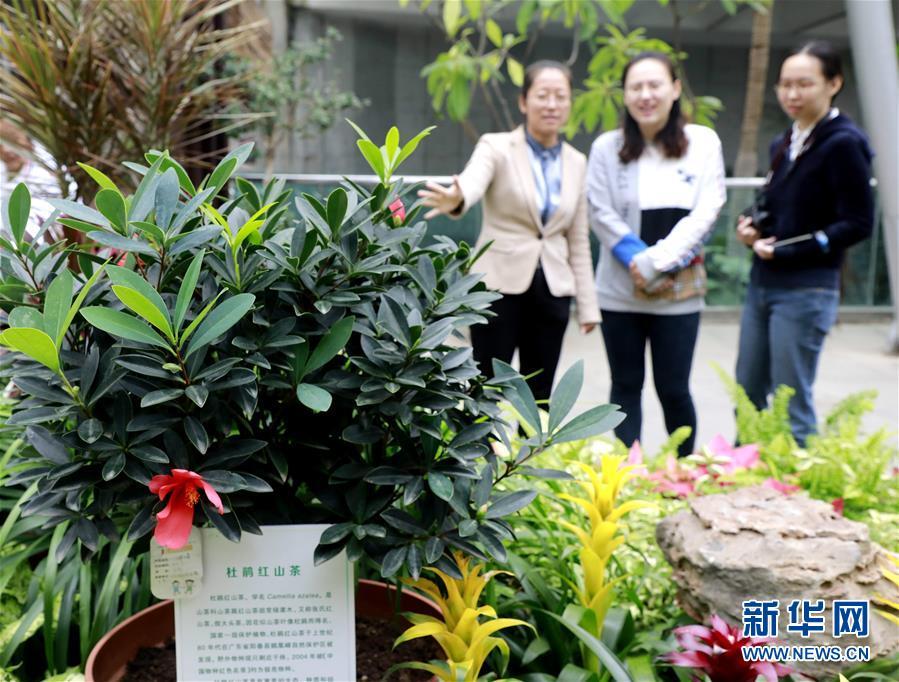 北京世园会200余个特有珍稀植物品种搬入北京植物园