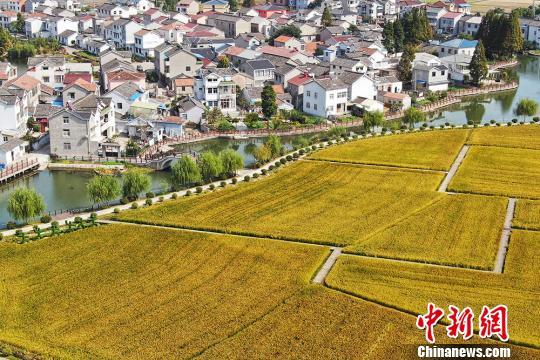 南京郊外阡陌交错