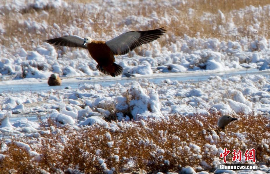 新疆巴里坤湿地迎初雪