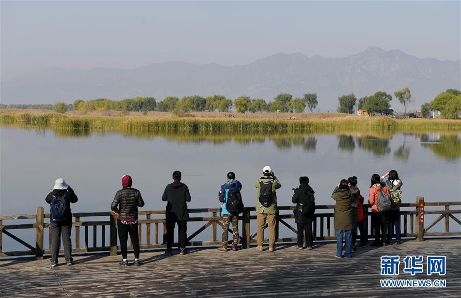 北京野鴨湖自然觀察節