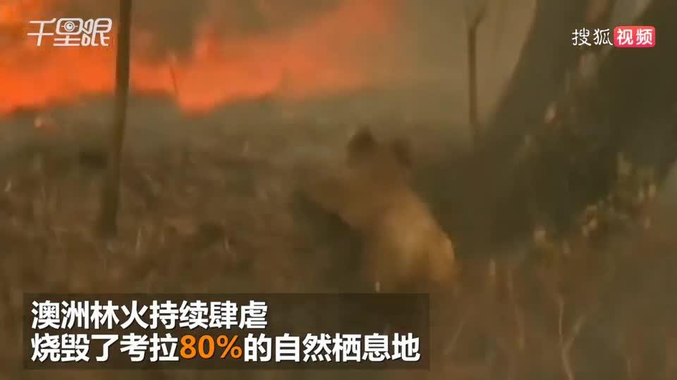 澳洲林火肆虐 上千只考拉死亡 现场惨不忍睹