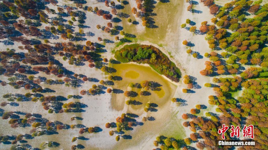 廬江水中森林景色如畫