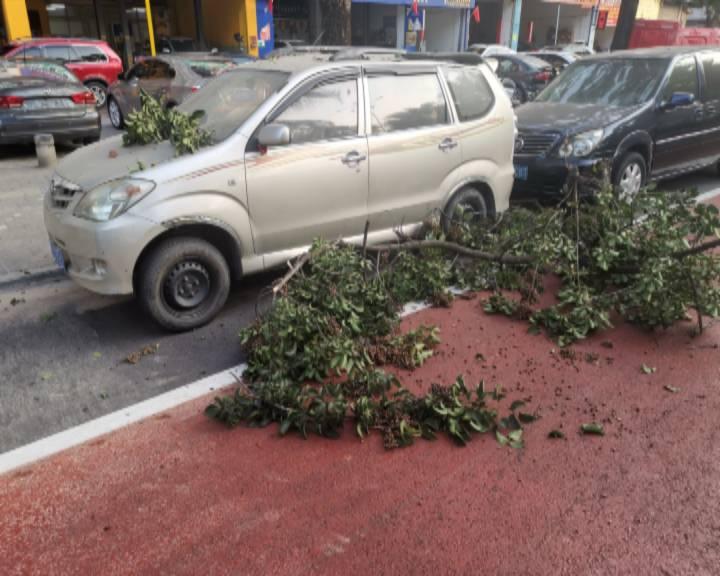 蓬江區迎賓大道西:樹枝折斷砸壞小車 市民盼望及時修剪