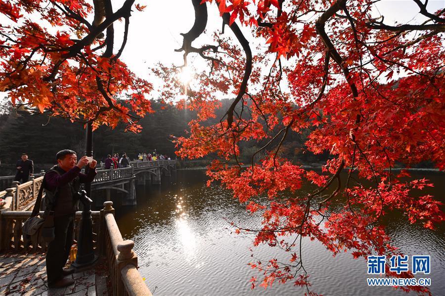 廬山:楓葉美景迎客來