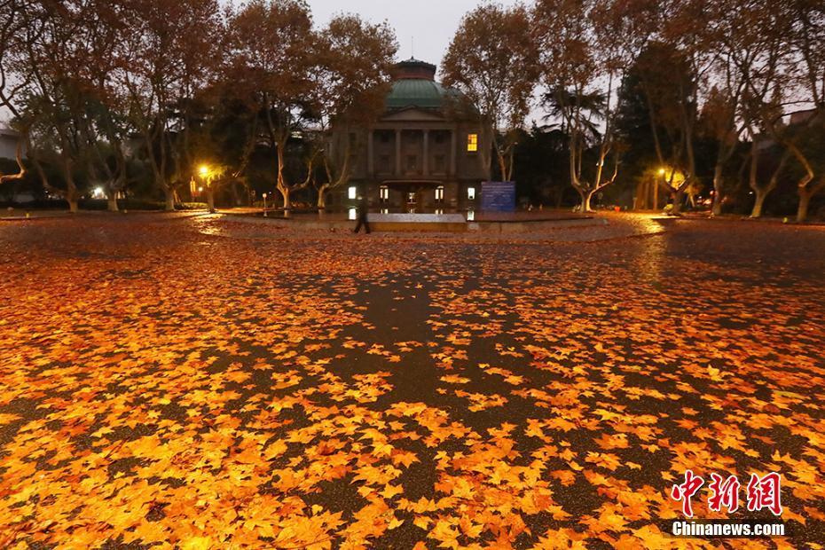 南京落葉繽紛鋪地毯