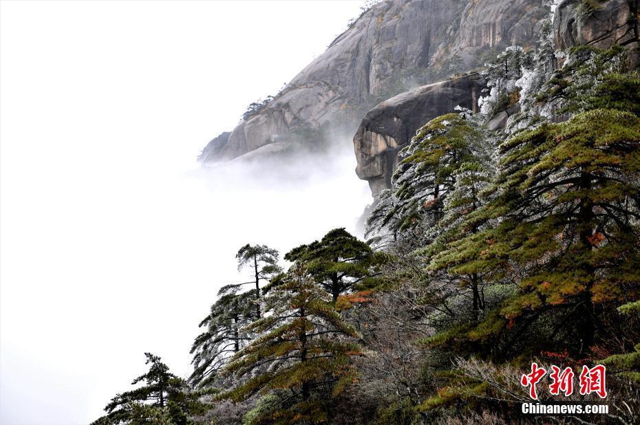 黃山迎今冬首霧凇景觀