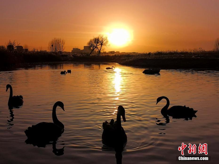 甘肃河西走廊湿地夕阳映照景色美