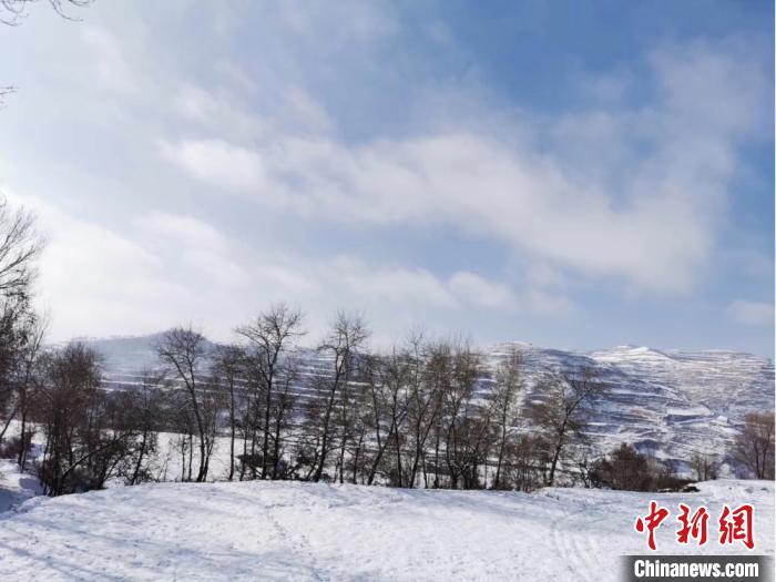"""甘肃""""雪后万象"""":天地一色 枯木宛如""""梦幻森林"""""""