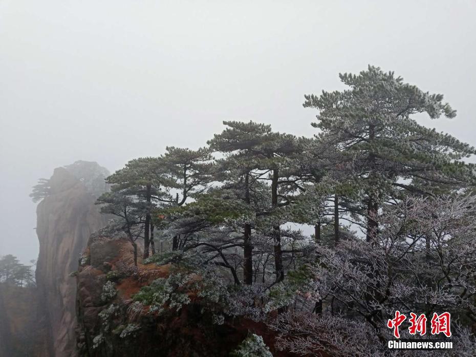 五百里黄山迎大面积雾凇景观 宛如琉璃世界