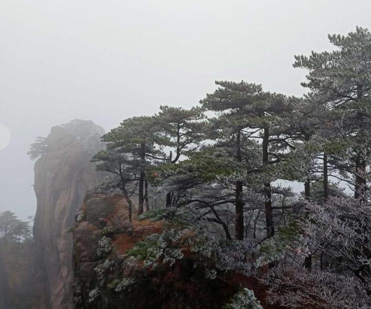 黃山迎大面積霧凇景觀
