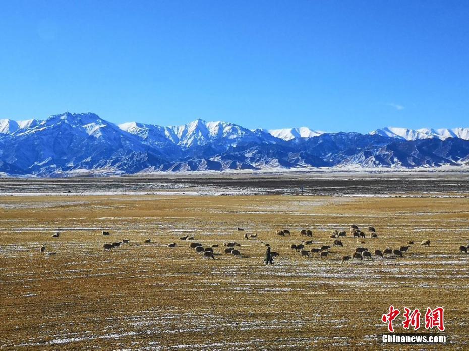甘肅山丹馬場雪后盡顯北國風光