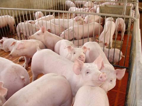 廣東發文允許生豬養殖用地使用一般耕地