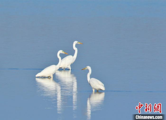 戈壁濕地成候鳥樂園