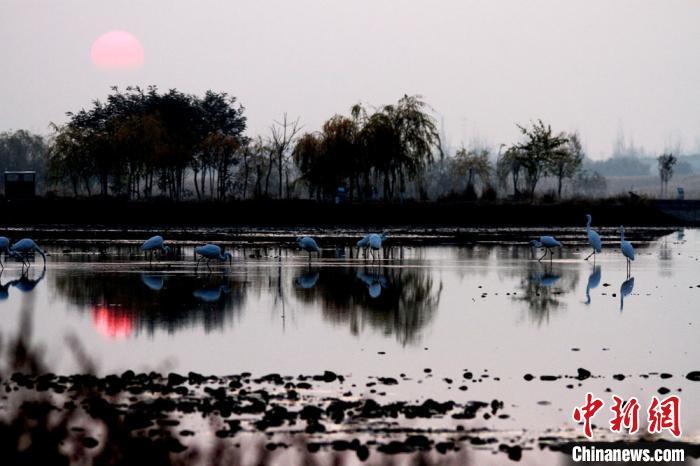 祁连山下鹭舞湿地景如水墨画