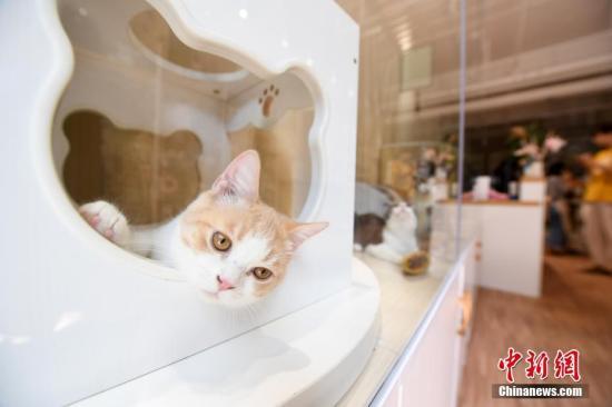 """俄羅斯男子2年救助約100只被困貓咪,被譽""""貓俠"""""""