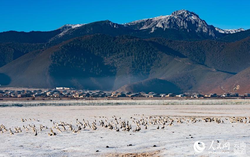 2019第四屆香格里拉冬季國際觀鳥節開幕