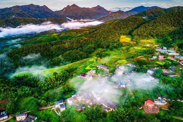 明年廣東將建成全國首個國家森林城市群