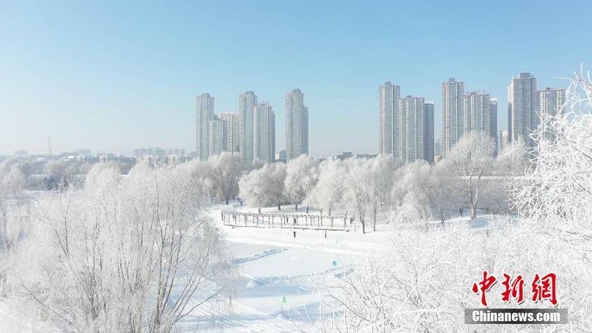 吉林城區今冬首現霧凇
