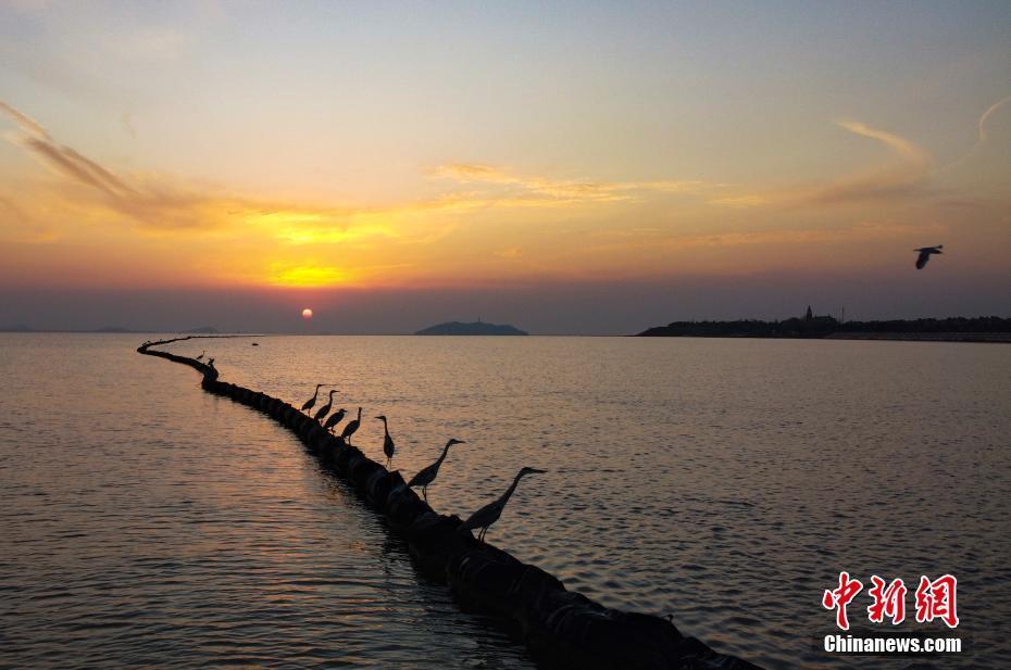 冬日安徽巢湖濕地景如畫