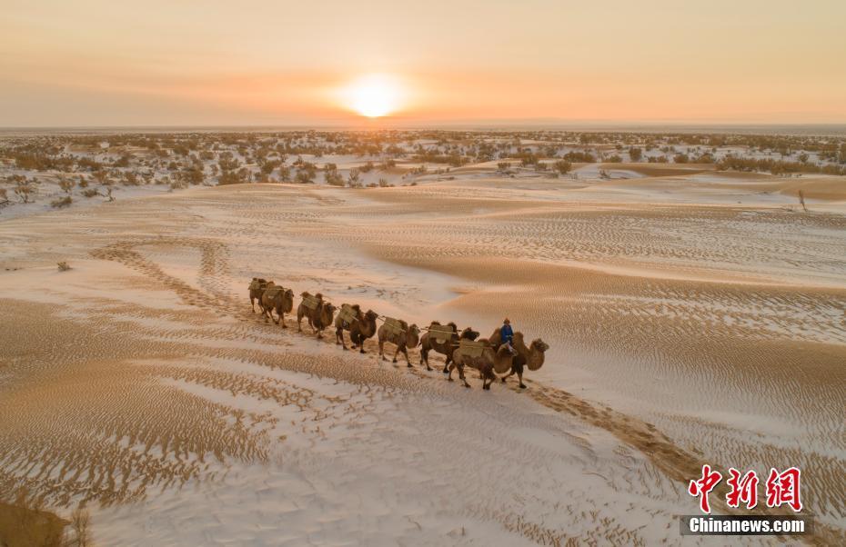 内蒙古乌拉特后旗 大漠逐驼影沙海美如画