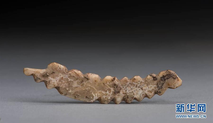 鄭州考古實證5000多年前中國先民已育蠶制絲