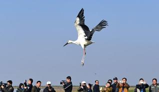 幫助受救助候鳥趕上遷徙大部隊 200余只候鳥在鄱陽湖畔放飛