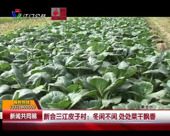 新會三江皮子村:冬閑不閑 處處菜干飄香