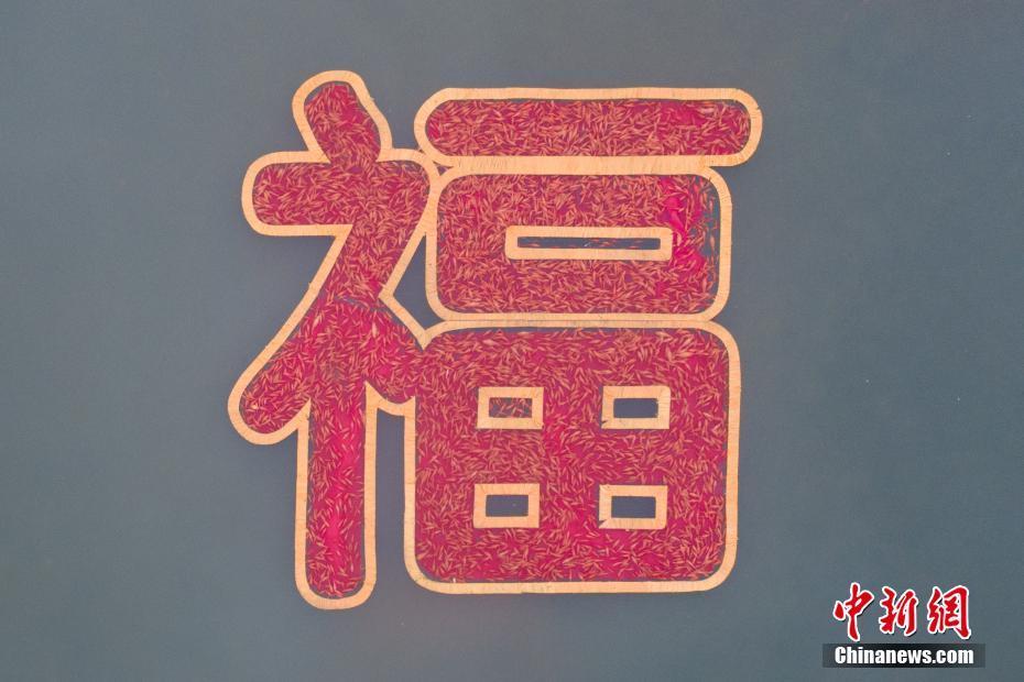 """6666鲤鱼拼成""""福""""字"""