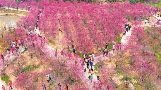 桃花:白水带风景区